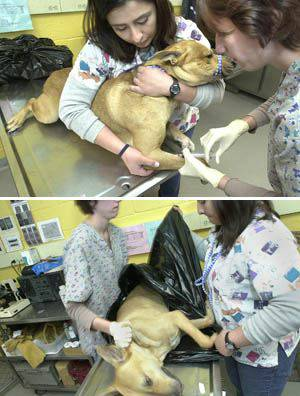 Where To Take Dog To Get Euthanized